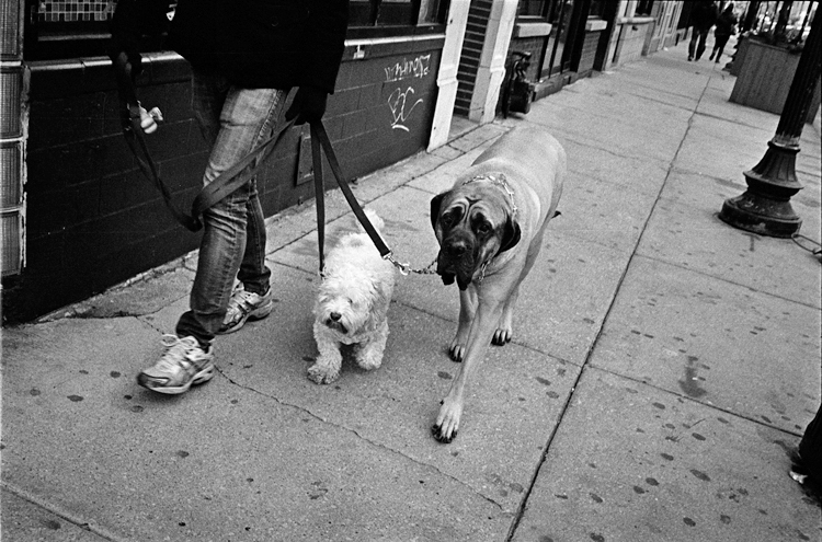 photoblog_chicago_photographer_freelance_photojournalist_michaeljarecki_dogs_street_face_expression_black&white