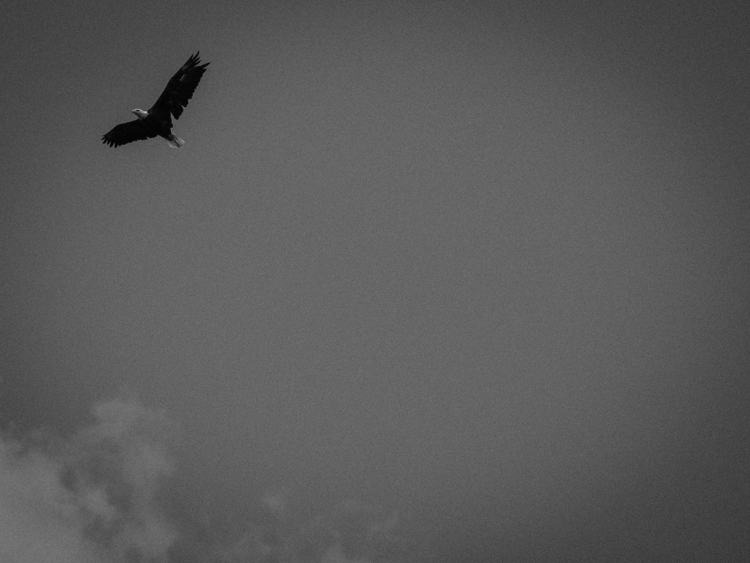 photoblog_chicago_freelance_photographer_michaeljarecki_bald_eagle_wisconsin_flight_sky_nature_bird