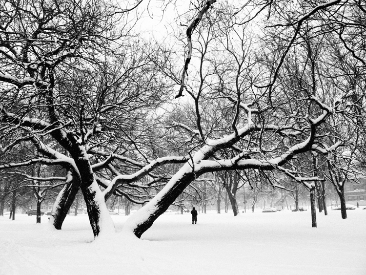 photoblog_chicago_freelance_photographer_michaeljarecki_snow_winter_park_trees_nature_man_landscape_city