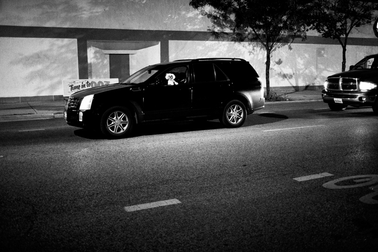 photoblog_chicago_freelance_photographer_michaeljarecki_photojournalist_dog_car_black&white_street_photograph