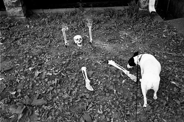 photoblog_chicago_freelance_photojournalist_michaeljarecki_skeleton_dog_halloween_bones_dog_matilda_jackRussell_funny