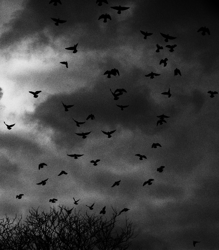 photoblog_chicago_freelance_photographer_michaeljarecki_photojournalist_birds_landscape_nature_black&white_motion_shape_sky