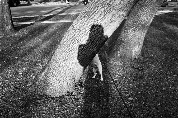 photoblog-chicago-freelance-photographer-michael-jarecki-photojournalist-dog-jack-russell-tree-shadow-self-portrait-palmer-square