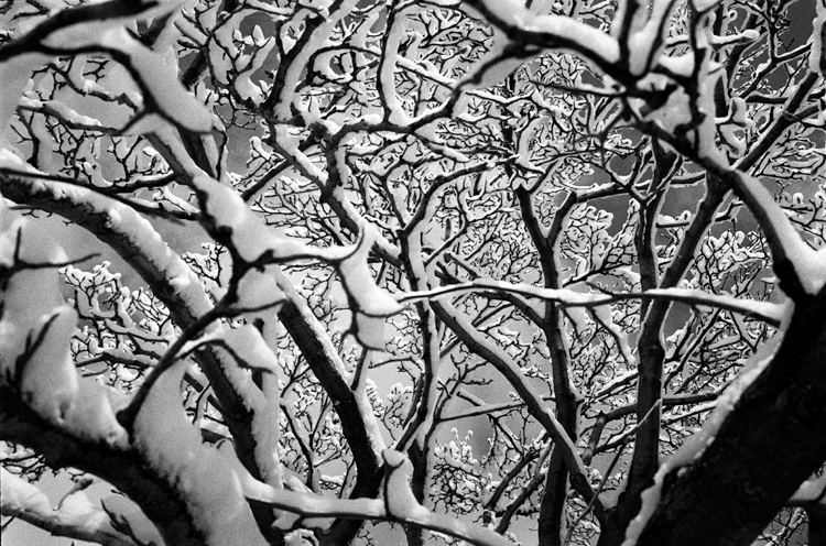 photoblog-freelance-photographer-michaeljarecki-photojournalist-trees-nature-snow-weather-black&white-cool-unique-awesome