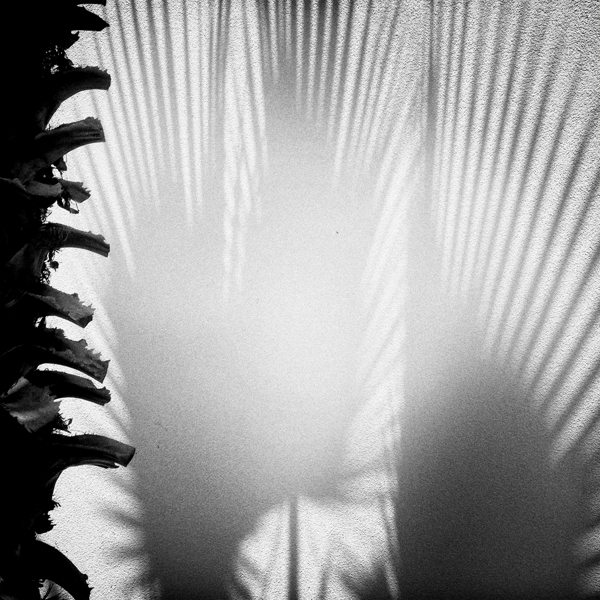 photoblog-freelance-photographer-michaeljarecki-photojournalist-chicago-black&white-cool-awesome-still-life-urban-nature-shadow-palm-tree-abstract