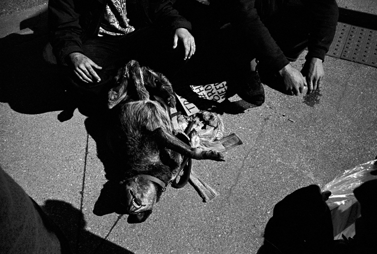 photoblog-freelance-photographer-michaeljarecki-commercial-street-candid-travelers-dog-people-black&white-street_photography