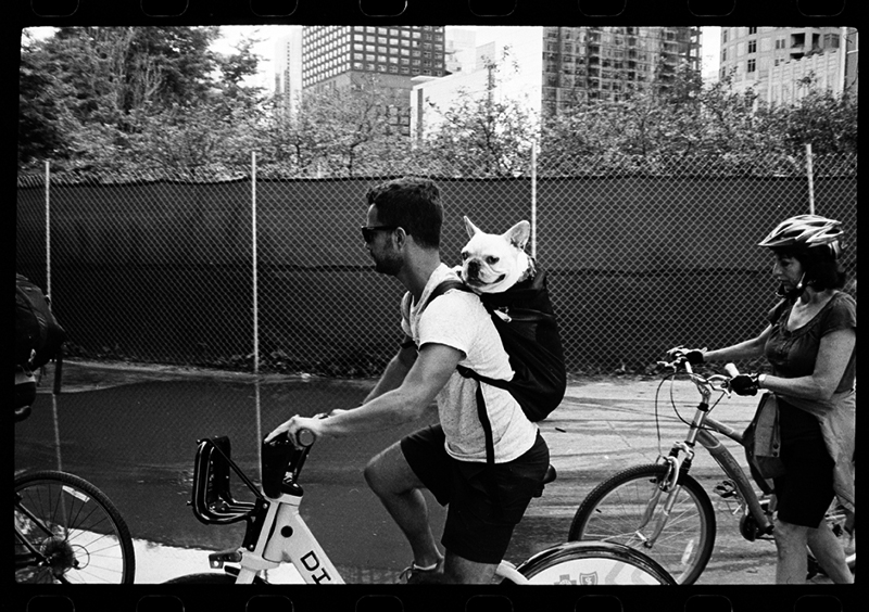 photoblog-freelance-photographer-michaeljarecki-commercial-blackwhite-candid-street_photography-dog-backpack-funny-cute-french-bulldog