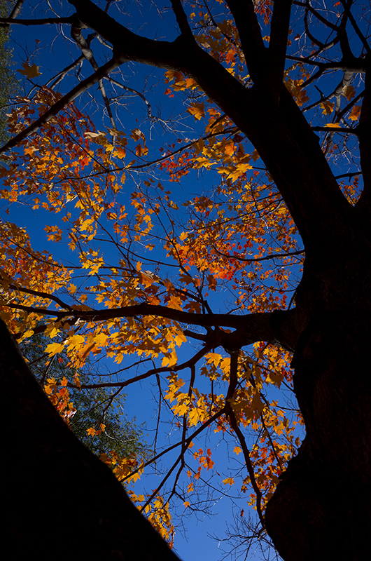 photoblog-freelance-photographer-michaeljarecki-commercial-street_photography-life-fall_colors-vibrant-nature-tree-autumn